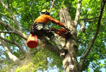 Tree service Orlando