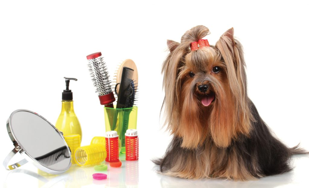 mobile dog grooming downtown miami