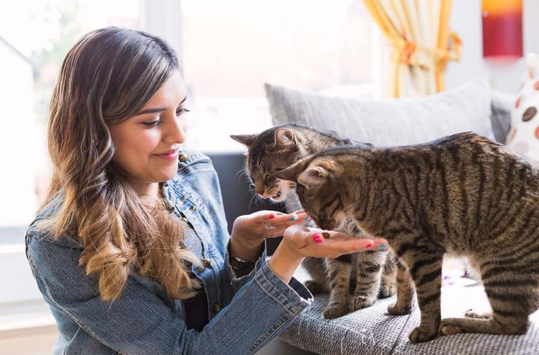 The best and safe CBD product for cats